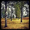 Runnevåls Gravfält (4).jpg