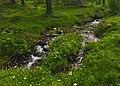 Ruscello (Alpe Veglia).jpg