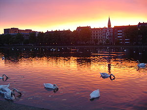 Swans, possibly feeding, on Lake Søerne in Cop...