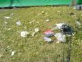 Søppel på Norway Cup.JPG