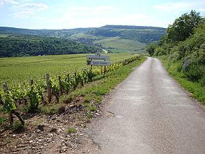 Saint-Aubin wine - Vineyards in Saint-Aubin