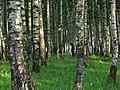 Salaspils, Salaspils pilsēta, Latvia - panoramio - alinco fan (4).jpg