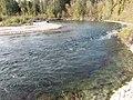 Salmon run at Adams River 2010 (5074664770).jpg