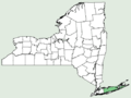 Schizaea pusilla NY-dist-map.png