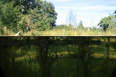 Schloss Orth Nationalparkzentrum Au-Erlebnisgelände 4.jpg