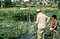 Seattle - Gardening in unidentified P-Patch, 1990 (26482273396).jpg
