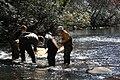 Seining in Shoal Creek (5164074999).jpg