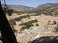 Sheep and goats at Kalandos Naxos DSCN1151.jpg