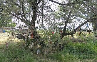 Bear River Massacre - Shoshone prayer tree at Bear River Massacre site.