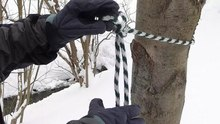 File:Siberian hitch.webm