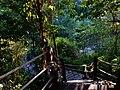 Similan Islands, 2015 march - panoramio (13).jpg