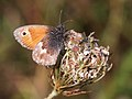 Small Heath (29425077590).jpg