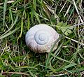 Snail - Flickr - gailhampshire.jpg