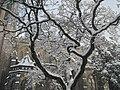 Snowy Christ Church Cathedral (Victoria).jpg