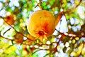 Somali Fruit.jpg