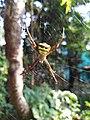Spider 12.jpg