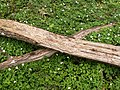 Split logs forming an x.jpg
