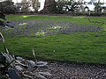 Spring Flowers in Chester Square - geograph.org.uk - 1194326.jpg