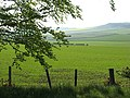 Spring crops - geograph.org.uk - 466165.jpg