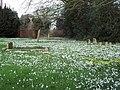 Spring flowers at Manston Churchyard - geograph.org.uk - 336185.jpg