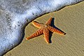 Starfish on a sand beach (Unsplash).jpg
