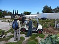 Starr-170615-0237-Brassica oleracea-with Kim and Hin gardener at Hydroponics-Hydroponics Town Sand Island-Midway Atoll (36191875032).jpg