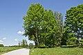 Stein- und Baumgruppe Drei Brüder bei Litschau 2014-05 01 NÖ-Naturdenkmal GD-067.jpg
