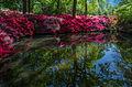 Still Pond 2, Isabella Plantation, Richmond Park, London, UK - Diliff.jpg