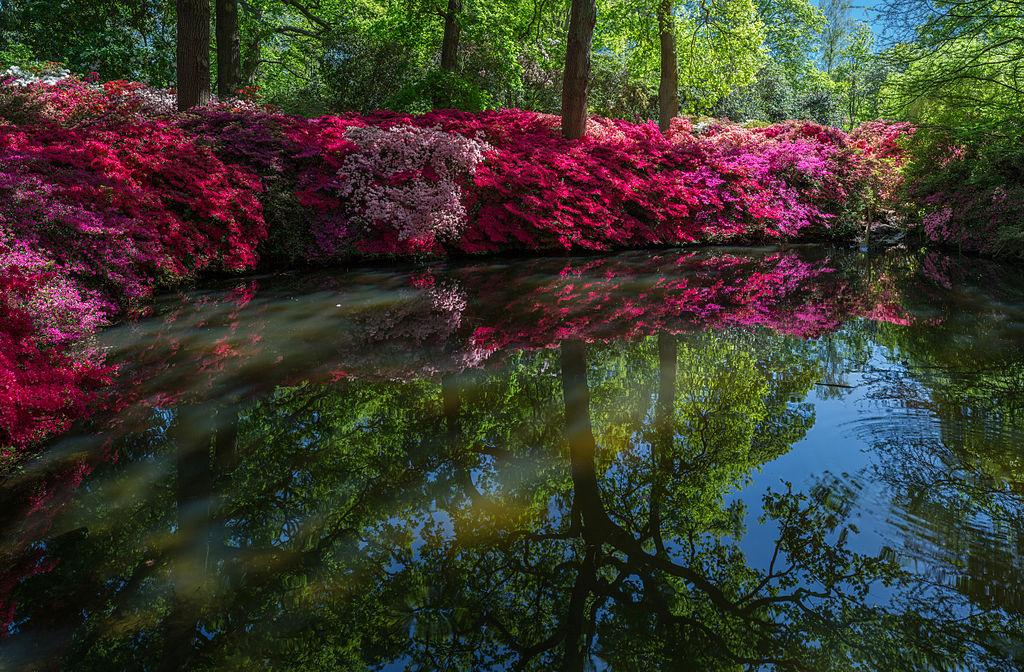 File:Still Pond 2, Isabella Plantation, Richmond Park ...