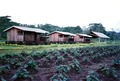 Student dormitories of the Stuyvenberg Rural Training Centre, with sweet potato plantation (3 June 1993).tif