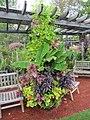 Stunning planter (6164505054).jpg