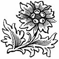 Stylish Flower Drawing.jpg