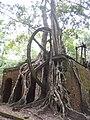 Sugar Mill, Lamanai 2010 01.jpg