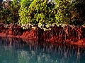 Sundarban 2016.jpg