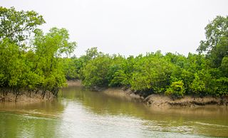 Sundarbans West Wildlife Sanctuary