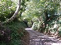 Sunken lane, Lower Sigdon - geograph.org.uk - 230090.jpg