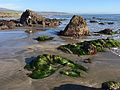 Surfgrass at Hearst Beach, San Simeon CA.jpg