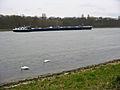 Swans on Rhein IMG 0340-5.jpg