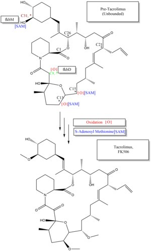 Tacrolimus biosynthesis part 3..tif