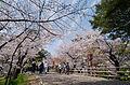 Takechiyo-dori St. Spring.jpg