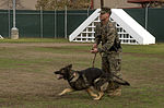 Taking a bite out of crime, military working dogs sink teeth into training 141201-M-OB827-090.jpg