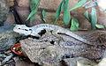 Taronga Zoo, Sydney (3365809589).jpg