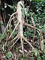 Tayap-Végétation (5).jpg