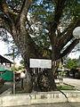 Taysan,Batangasjf9820 21.JPG