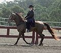Tennessee Walking Horse1.jpg