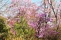 Tenryuji (3693017138).jpg