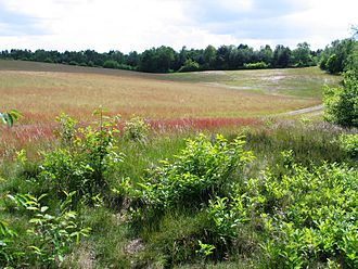 Belgium - Campine landscape.