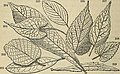 The American botanist and florist; including lessons in the structure, life, and growth of plants; together with a simple analytical flora, descriptive of the native and cultivated plants growing in (14782489285).jpg