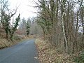 The Road through Wentwood Forest - geograph.org.uk - 118619.jpg