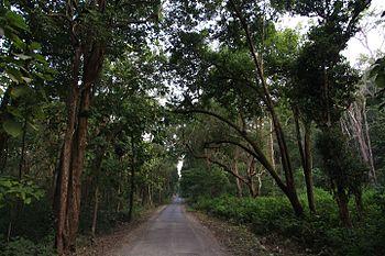 The Way to The Jungle (Jim Corbett).jpg